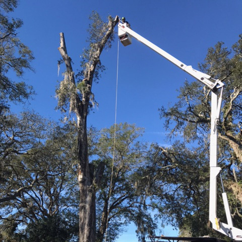 tree removal st augustine