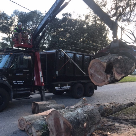 jacksonville tree service