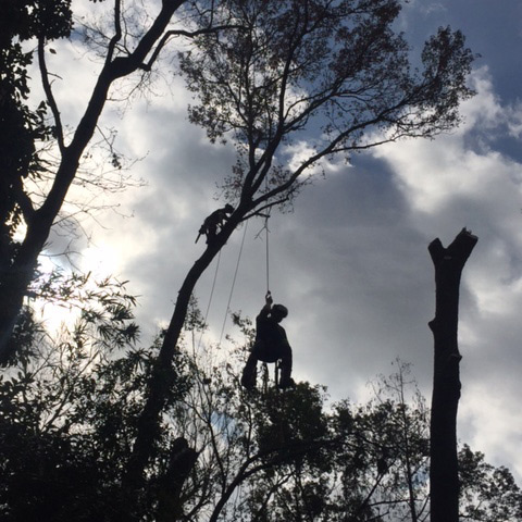 tree trimming in st augustine fl