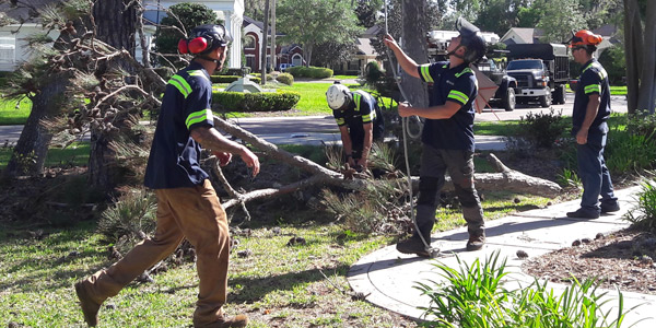 tree removal St. Augustine