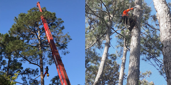 tree removal experts st augustine fl