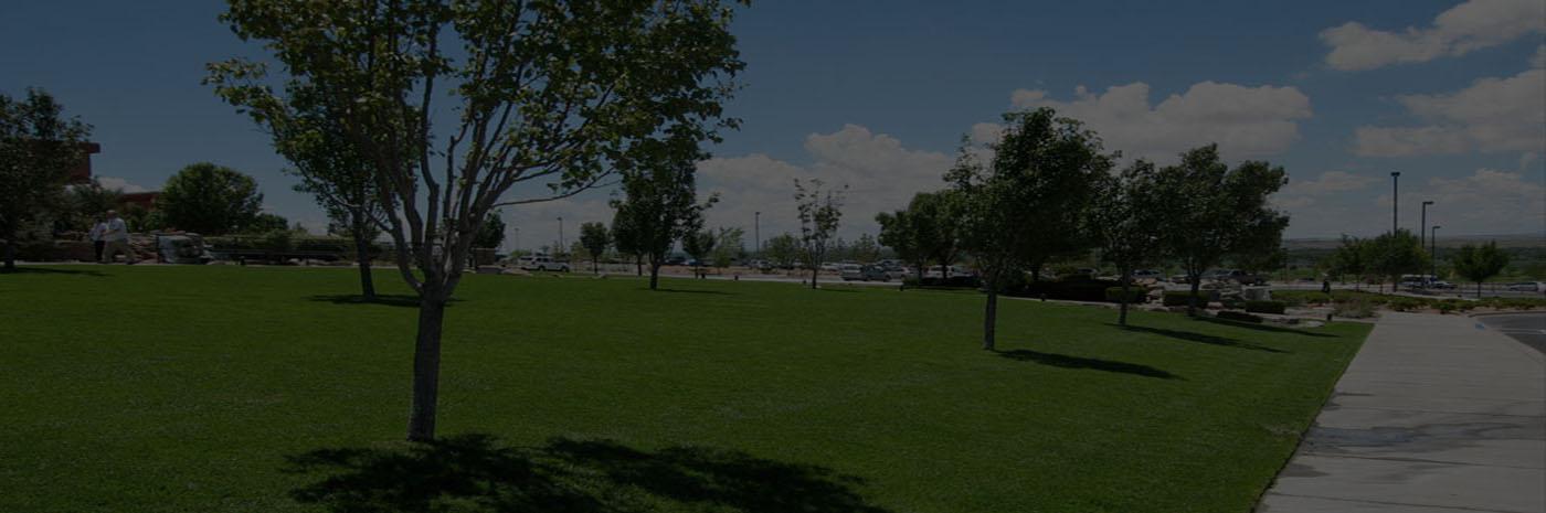 commercial landscaping st augustine jacksonville fl