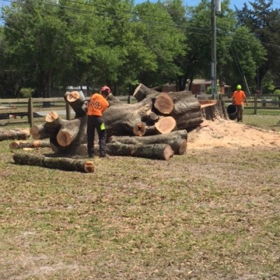 Tree Removal Services in Florida
