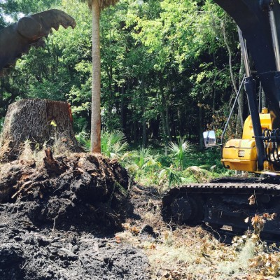 Tree Service and Stump Grinding St Augustine