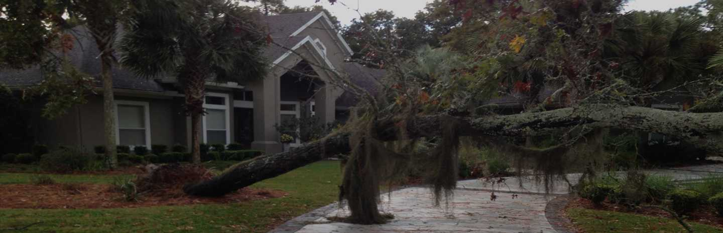 best tree removal service in St. Augustine