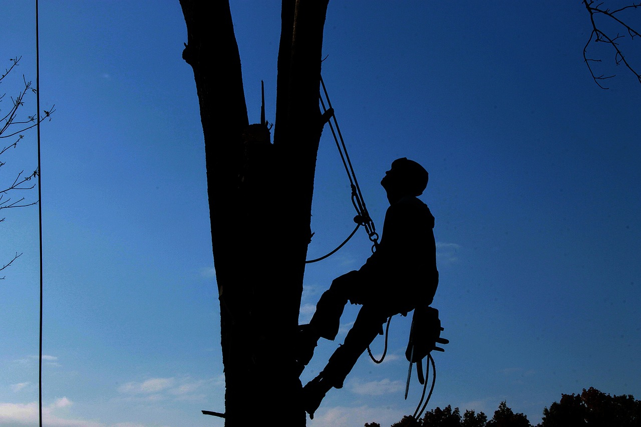 Certified Arborist and Professional Tree Service