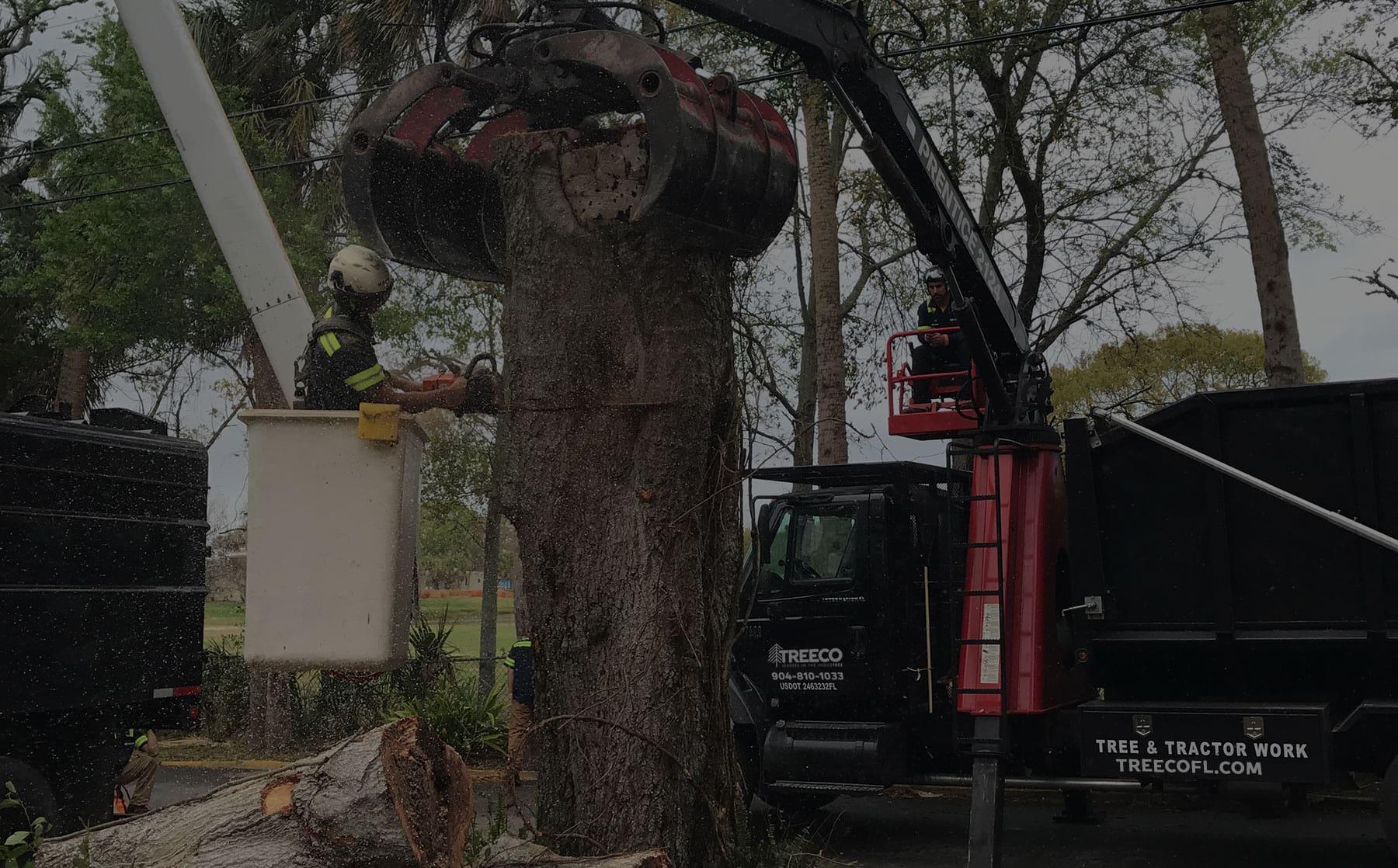Tree Service St Augustine