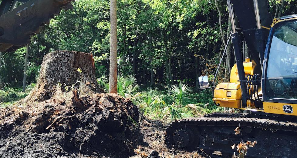stump grinding jacksonville fl
