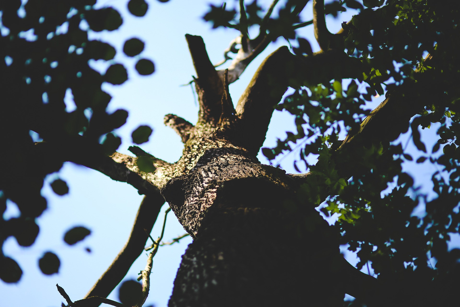 sick tree treeco tree removal service in jacksonville and st augustine