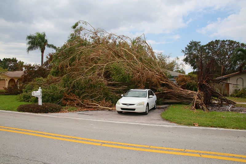 North Florida Tree Removal Company