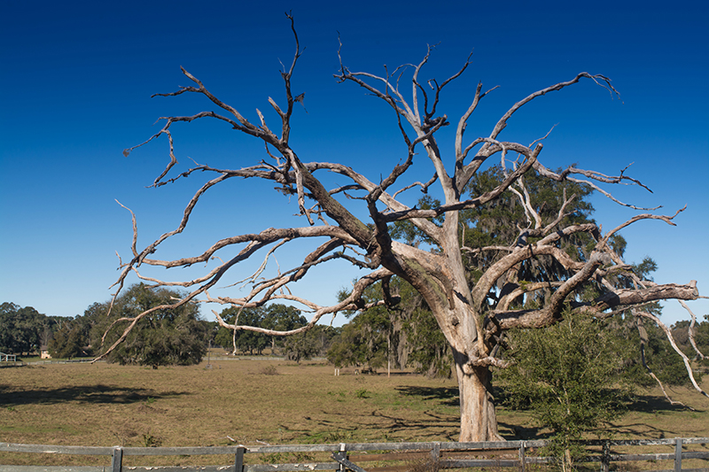 Thinking of Buying a House With a Sick or Dead Treee? | Treeco