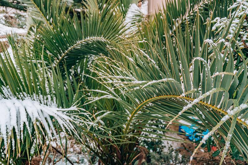 tree company in Jacksonville